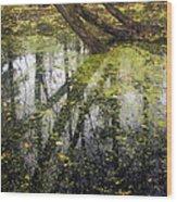 Autumn In Wildwood Park Wood Print