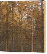 Autumn Larch Wood Print