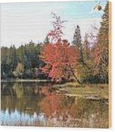 Autumn Leaning Tree Wood Print