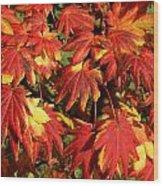 Autumn Leaves 08 Wood Print