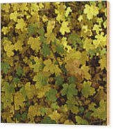 Autumn Leaves 091 Wood Print