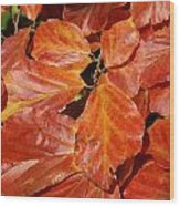 Autumn Leaves 80 Wood Print