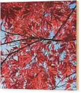 Autumn Leaves And Blue Sky Wood Print