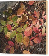 Autumn Leaves And Needles Wood Print