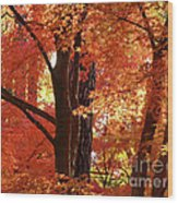 Autumn Leaves Wood Print by Carol Groenen