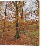 Autumn Leaves Common Wood  Wood Print
