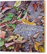 Autumn Leaves In Creek Bed Wood Print