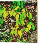 Autumn Leaves In Green And Yellow Wood Print