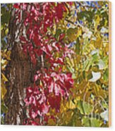 Autumn Leaves In Palo Duro Canyon 110213.97 Wood Print