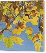 Autumn Leaves Of The Tulip Tree Wood Print