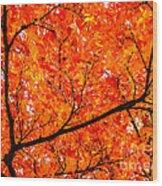 Glorious Autumn Leaves Wood Print