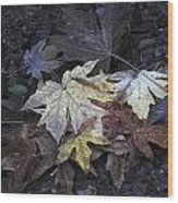 Autumn Leaves Submerged In Pescadero Creek Wood Print