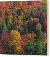 Autumn Leaves Vermont Usa Wood Print