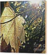 Autumn Light On Leaf Wood Print