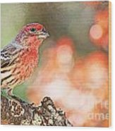 Autumn Male House Finch 1 Wood Print
