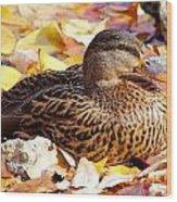 Autumn Mallard Wood Print