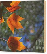 Autumn Maple Leaves In The Sun Wood Print