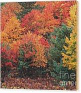 Autumn Maple Trees Wood Print