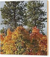 Autumn Maple With Pines Wood Print