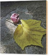 Autumn Moment Wood Print