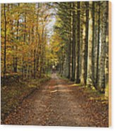 Autumn Mood In The Forrest Wood Print