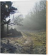 Autumn Morning 2 Wood Print by David Stribbling