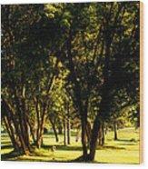 Autumn Morning Stroll Wood Print
