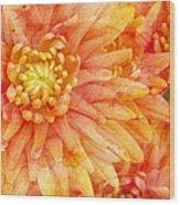 Autumn Mums Wood Print by Heidi Smith