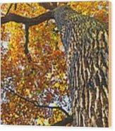 Autumn Oak Wood Print