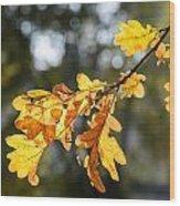 Autumn Oak Leaves Wood Print