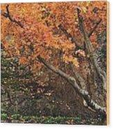 Autumn Of My Life Wood Print