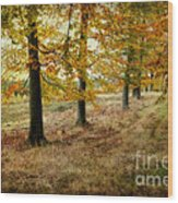Autumn On Cannock Chase Wood Print