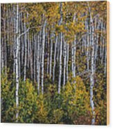 Autumn On Mcclure Pass Wood Print