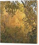 Autumn On The Bosque Wood Print