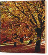 Autumn On Wombat Hill II Wood Print