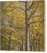 Autumn Orange Forest Colors At Hager Park No.1189 Wood Print