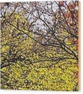 Autumn Panorama Wood Print