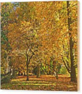 Autumn Park Wood Print
