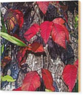 Autumn Poison Ivy Wood Print
