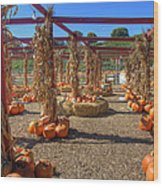 Autumn Pumpkin Patch Wood Print by Joann Vitali