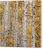 Autumn Quaking Aspen Wood Print