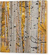 Autumn Quaking Aspen Panoramic Wood Print