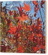 Autumn Reach  Wood Print