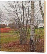 Autumn Red Field Maine  Wood Print