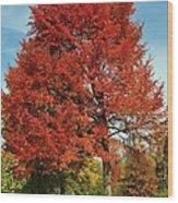 Autumn Red Wood Print