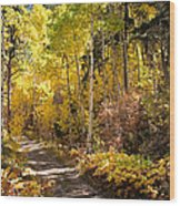 Autumn Road - Tipton Canyon - Casper Mountain - Casper Wyoming Wood Print
