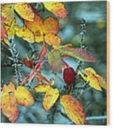 Autumn Rose Wood Print
