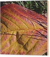 Autumn Saga Wood Print