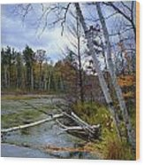Autumn Scene Of Along The Shore Of The Platte River In Michigan Wood Print