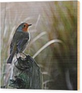 Autumn Scottish Robin Wood Print